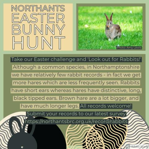 Northants Easter Bunny Hunt